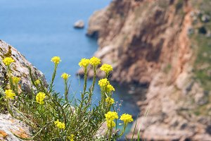 Summer rocky coast (Crimea, Ukraine)