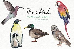 Watercolor Clip Art - Birds