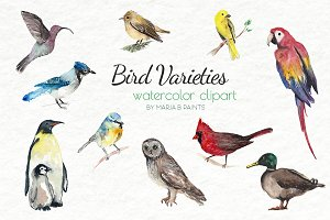 Watercolor Clip Art - Bird Bundle