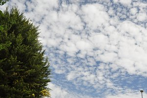 tree and cirrus clouds