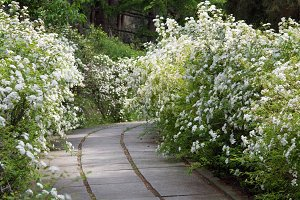 Spring Crimea park