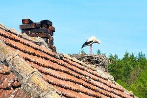white-black stork