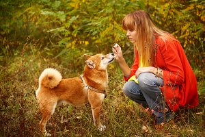 Girl plays with a dog Shiba Inu