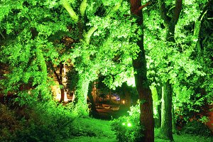 Illuminated in green trees