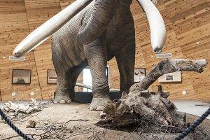 Model of mastodon