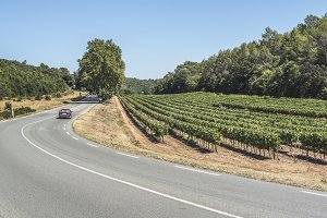 Vineyards and road