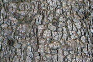 Bark Texture 4.