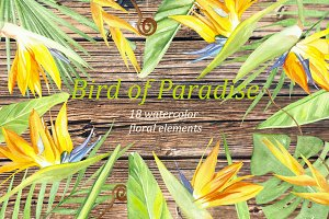 watercolor set bird of paradise