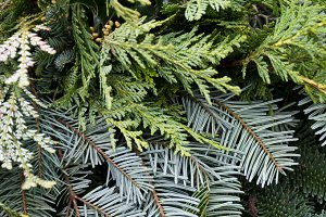 Arrangement of mixed evergreens