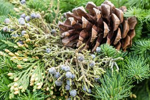 Evergreen decoration with pine cone