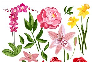 Nature flowers vector set