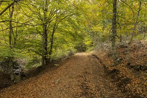 Path among the trees
