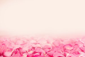 Pink rose petal Abstract background