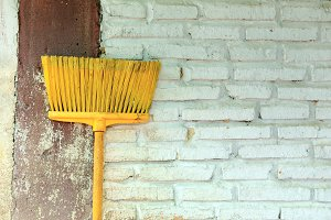 Yellow Broom