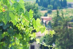 Sunny day. Tuscan. Italy