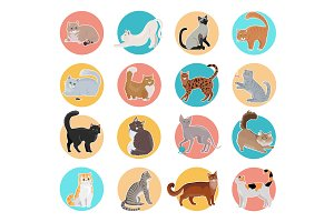Icons with Cat
