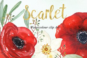 Anemones scarlet Watercolour clipart