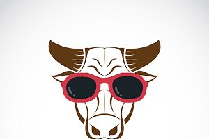 Bull wearing sunglasses