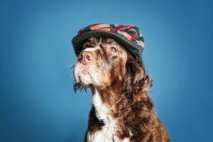 distinguished dog in color