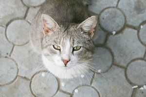 Domestic cat looking at you