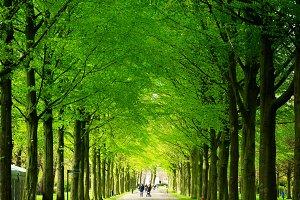 Clingendael park, Den Haag, Netherlands