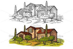 Rural landscape villa olive tree