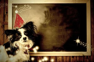Funny dog Christmas greeting cards