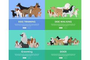 Dog Walking, Training, Grooming