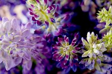 violet and purle wild flowers macro shot