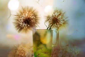 Two dandelion in the cup