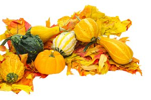 Arrangement of gourds on leaves