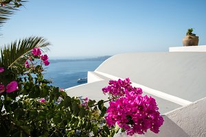 Flowers on a Roof Line