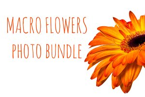 SALE: 4 isolated flower photo bundle