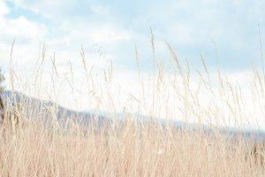 Walking through golden meadow grass2