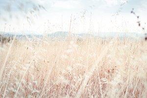 Walking through golden meadow grass