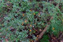 Orange Bush 9 Picture Pack