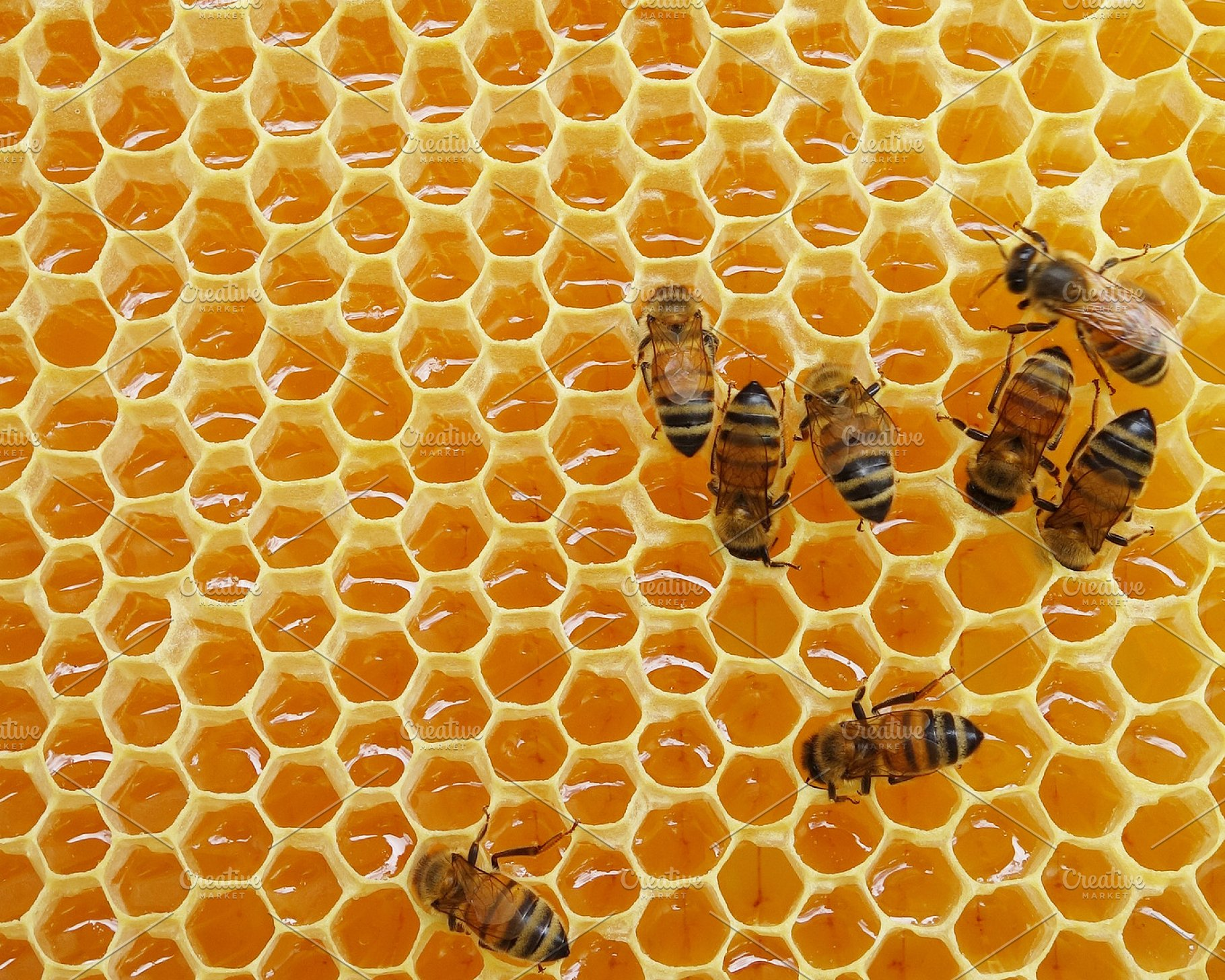 Honey Bees on Honeycomb | High-Quality Animal Stock Photos ...