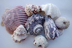 Mixed Shells 1