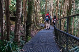 Rainforest Hikers