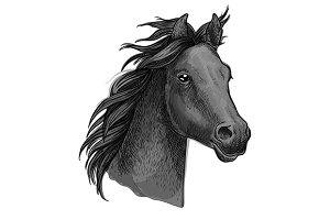 Dark gray horse profile