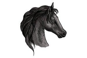 Black mustang profile