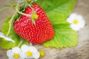 Perfect sweet ripe strawberries on wood