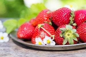 Fresh ripe strawberries crop in garden