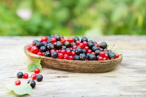 red and blue black currant in garden