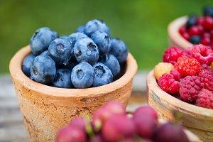 currant, raspberry, gooseberry, blueberry in garden