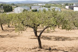 Almond trees and factory