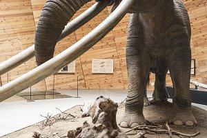 Model of mastodon in real stature.