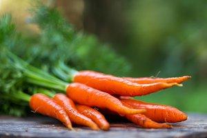 Carrot growing in garden