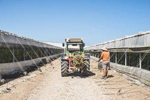 Tractor between greenhouses