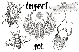Insect set. Hand drawn illustration